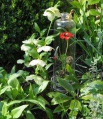 Un cloche accueille 1 coquelicots en fleurs stabilisées. Un jardin au milieu du salon .