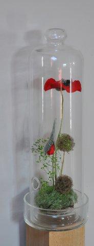 cloche de verre et dessous un coquelicot et un bouton en végétaux stabilises, nigelle, gypsophile et mousse.