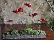 Champs de coquelicots rouges stabilisées dans un contenant ardoise plat de 35cm de long
