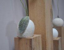 Détails socle sur graine blanchie des coquelicots et pavots.
