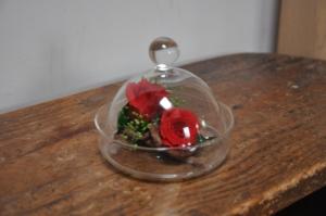 2 mini rose lovées dans une cloche de verre