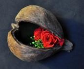 deux mini roses lovées dans leur graine
