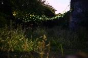 la-nuit