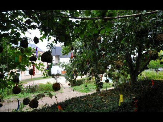 vue sous l'arbre de la Constellation végétale