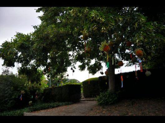 constellation végétale festival de st jean de braye